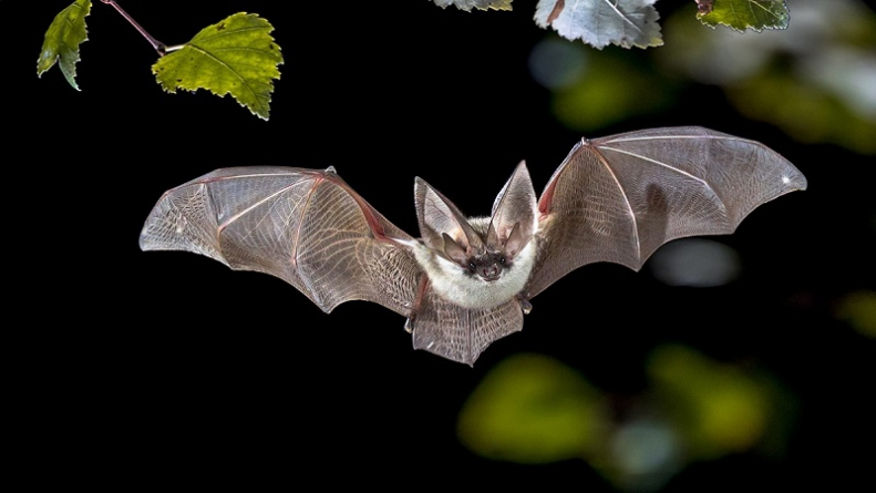 Virulence of Bats-Caused Diseases