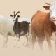 'Online qurbani' trend growing ahead of Eid ul Azha