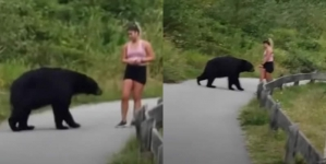 Scary Moment Massive Black Bear Takes a Swipe at Female Jogger on Hiking Trail