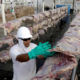 JBS: FBI says Russia-linked group hacked meat supplier
