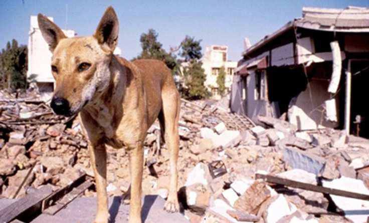 Animals can predict earthquakes