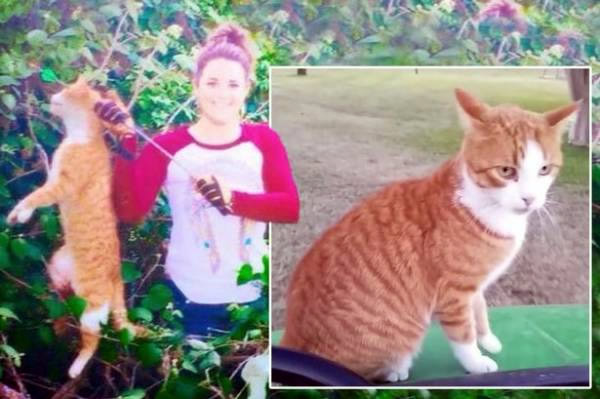 Axe Falls On Vet Who Killed a Cat With Bow & Arrow