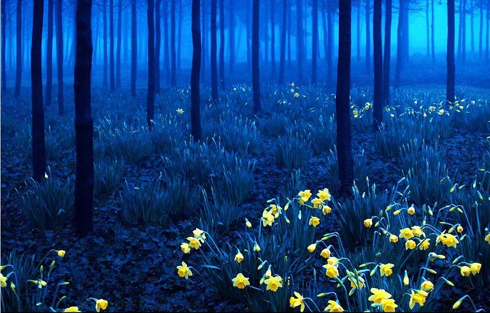 Blue Forest during night