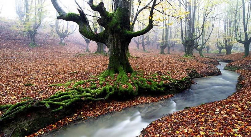 Most Beautiful Forests in The World