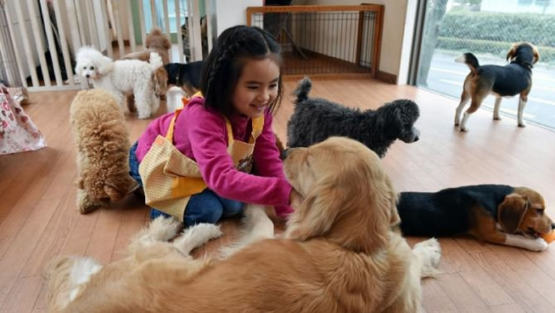Dogs By The Hour: Japan Offers Pet Rental Service