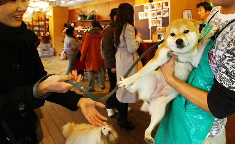 Dogs by the hour Japan offers pet rental service