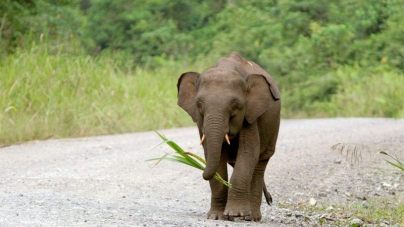Elephants Cause Mischief in Thai National Park