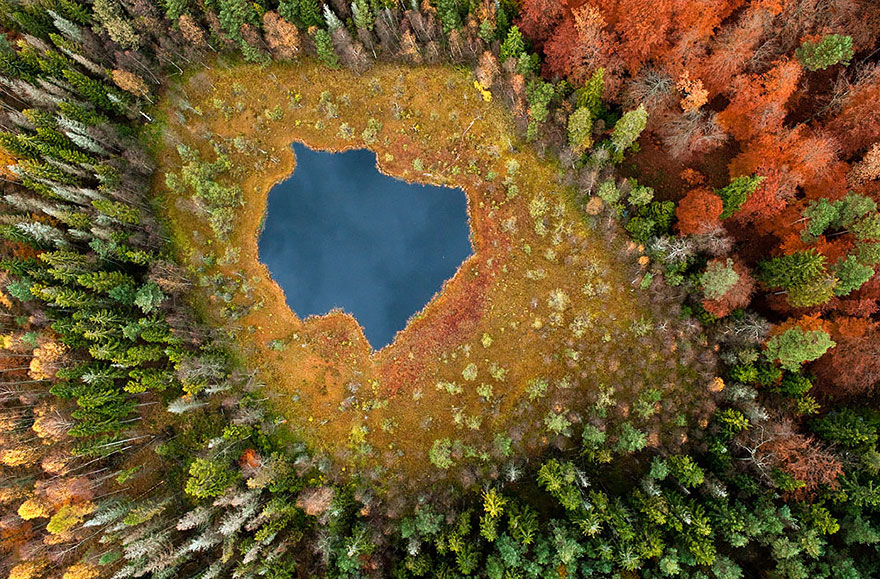 Forest Lake, Poland