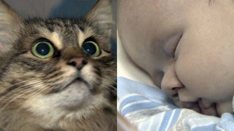 Watch Video: Homeless Russian Cat 'Saves' Abandoned Baby Boy