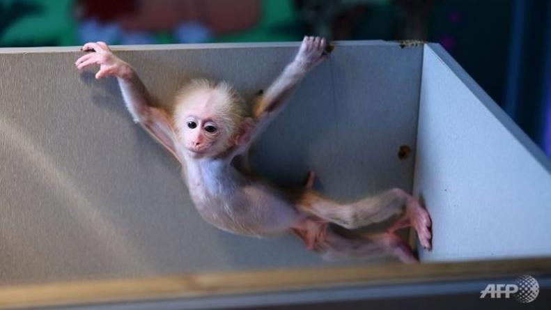Japan Zoo Rethinking Naming Monkey Charlotte
