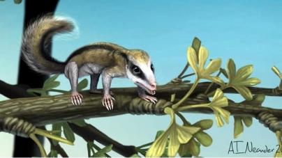 Jurassic Mammals Unearthed