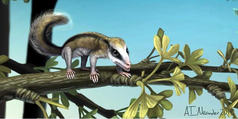 Jurassic mammals unearthed