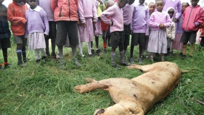 Maasai Kill Six Lions After Livestock Attack