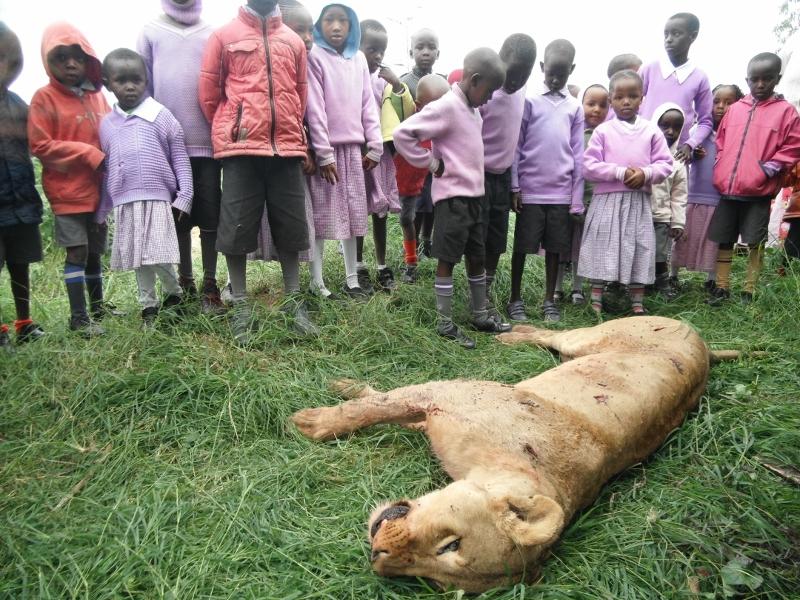 Maasai Kil Lions