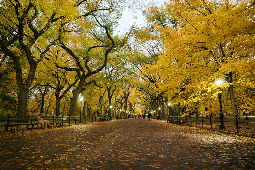 Poet's Walk, Central Park, New York, USA