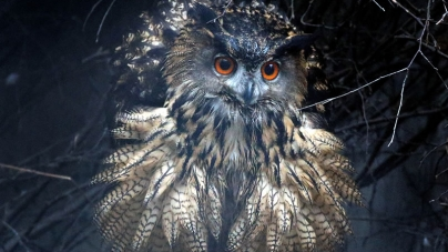 Rogue Bird Sows Terror in Dutch City