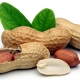 Scientists Find Peanut Eating Prevents Allergy, Urge Rethink