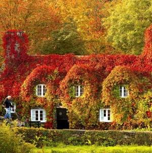 12 Stunning Autumn Before and After Transformations