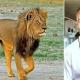 American Man Wanted in killing of Cecil the Lion