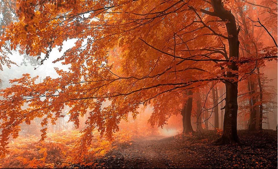 carpathians forest