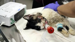 Zombie or Miracle? Cat Claws His way Back from Dead