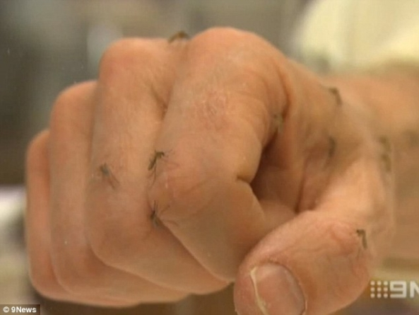 Why Mosquitoes Are More Attracted to Some People Than Others