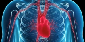Is Most Younger Women's Heart Disease Preventable?